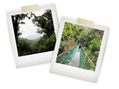 monteverde snapshots